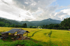 Terraced rice field in Chiang Mai Thailand. Stock Photography