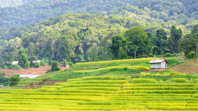 Terraced rice field in Chiang Mai Thailand. Stock Image