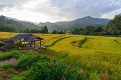 Terraced rice field in Chiang Mai Thailand. Stock Photos