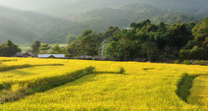 Terraced rice field Chiang mai, Thailand Stock Images