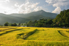 Terraced rice field Chiang mai, Thailand Stock Image