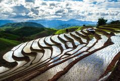 Terraced Rice Field in Chiangmai Thailand. Agriculture asia asian color country cultivation curve east eastern environment farm farming food gradient grains royalty free stock images