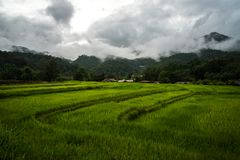 Terraced rice field in cloudy day at Mae Klang Luang in Chiang Mai, Thailand. View of terraced rice field in cloudy day at Mae Klang Luang in Chiang Mai Stock Photo