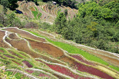 Terraced rice field of  Hani ethnic people in Yuanyang, Yunnan province, China. Stock Photos