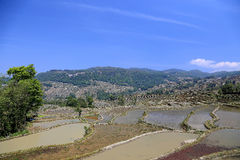 Terraced rice field of  Hani ethnic people in Yuanyang, Yunnan province, China. Royalty Free Stock Image
