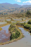 Terraced rice field of  Hani ethnic people in Yuanyang, Yunnan province, China. Royalty Free Stock Photography