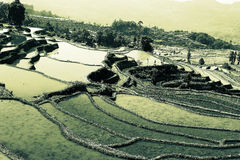 Terraced rice field of  Hani ethnic people in Yuanyang, Yunnan province, China. Stock Photography