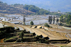 Terraced rice field of  Hani ethnic people in Yuanyang, Yunnan province, China. Royalty Free Stock Images