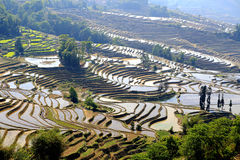 Terraced rice field of Hani ethnic people in Yuanyang, Yunnan province, China. Territory of Yuanyang County is full of mountains, all terraces were built on the stock images