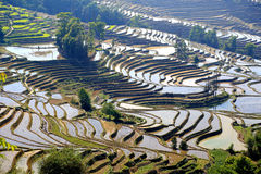 Terraced rice field of Hani ethnic people in Yuanyang, Yunnan province, China. Territory of Yuanyang County is full of mountains, all terraces were built on the stock photo
