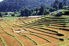 Terraced Rice Field after harvested Royalty Free Stock Image