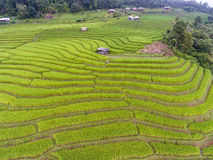 Terraced Rice Field in Hill, Aerial Royalty Free Stock Photos