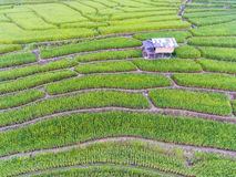 Terraced Rice Field in Hill Royalty Free Stock Photo