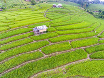 Terraced Rice Field in Hill Royalty Free Stock Image