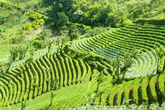 Terraced rice field on hill Stock Photo