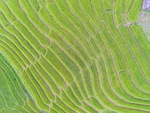 Terraced Rice Field in Hill, Top Royalty Free Stock Image