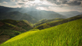 Terraced rice field inside fog and morning ray Royalty Free Stock Photos