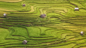 Terraced rice field inside fog and morning ray in Mu Cang Chai Stock Photos