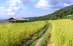 Terraced rice field with irrigation canal at Ban Pa Bong Piang, Chiang Mai in Thailand Stock Photography