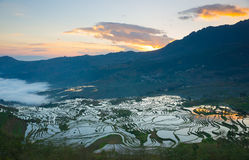 Terraced rice field landscape Royalty Free Stock Photos