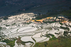 Terraced rice field landscape Royalty Free Stock Images