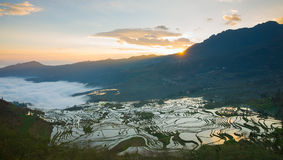 Terraced rice field landscape Stock Photography