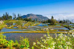 Terraced rice field landscape Royalty Free Stock Photo