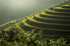 Terraced rice field landscape of Mu Cang Chai, Yenbai, Northern Royalty Free Stock Images