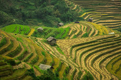 Terraced rice field landscape of Mu Cang Chai, Yenbai, Northern Stock Photography