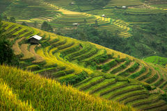Terraced rice field landscape of Mu Cang Chai, Yenbai, Northern Royalty Free Stock Photography