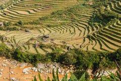 Terraced rice field landscape near Sapa in Vietnam. Terraced rice field landscape near Sapa Lao Cai, Vietnam stock photo