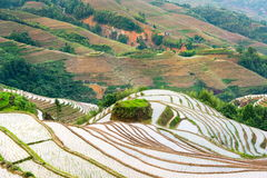Terraced rice field in Longji, Guilin area, China Royalty Free Stock Photography
