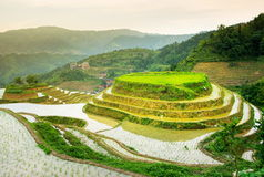 Terraced rice field in Longji, Guilin area, China Royalty Free Stock Image
