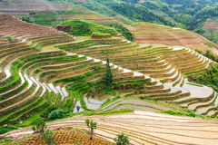 Terraced rice field in Longji, Guilin area, China Royalty Free Stock Images