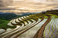Terraced Rice Field in Mae Cham district. Chiangmai province, Royalty Free Stock Photo