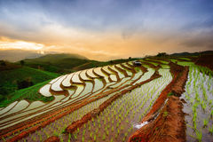 Terraced Rice Field in Mae Cham district. Chiangmai. Thailand. Royalty Free Stock Photography