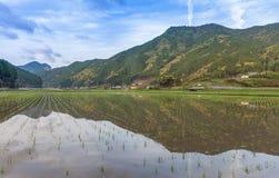 Terraced rice field at Maruyama Senmaida , Kumano City, Mie Prefecture Stock Photography