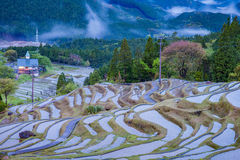 Terraced rice field at Maruyama Senmaida , Kumano City, Mie Prefecture Royalty Free Stock Photos