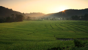 Terraced rice field at morning sunrise Royalty Free Stock Photo