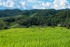 Terraced rice field on Mountain, Pa Pong Piang village, Chiang m Royalty Free Stock Image