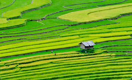 Terraced rice field in Mu Cang Chai, northern Vietnam Stock Image