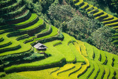 Terraced rice field in Mu Cang Chai, Vietnam. Terraced rice field landscape near Sapa in Vietnam. Mu Cang Chai Rice Terrace Fields stretching across the royalty free stock photography