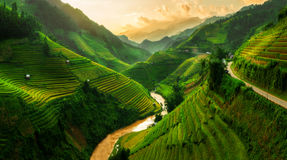 Terraced rice field in Mu Cang Chai, Vietnam. Terraced rice field landscape near Sapa in Vietnam. Mu Cang Chai Rice Terrace Fields stretching across the Stock Photo