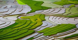 Terraced rice field in Mu Cang Chai, Vietnam. Mu Cang Chai is a rural district (of Yen Bai province), in the northeastern Vietnam. in Mu Cang Chai there are many royalty free stock image