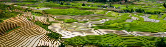 Terraced rice field in Mu Cang Chai, Vietnam. Mu Cang Chai is a rural district (of Yen Bai province), in the northeastern Vietnam. in Mu Cang Chai there are many stock image