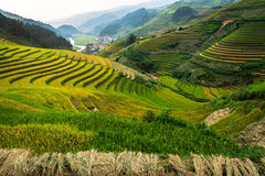 Terraced rice field of Mu Cang Chai, Yenbai, Vietnam royalty free stock photo