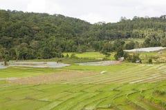 Terraced rice field Stock Photos