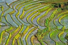 Terraced rice field in Northern Vietnam Stock Image
