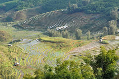Terraced rice field in Northern Vietnam Stock Photography