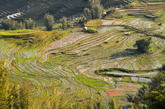 Terraced rice field in Northern Vietnam Stock Photo